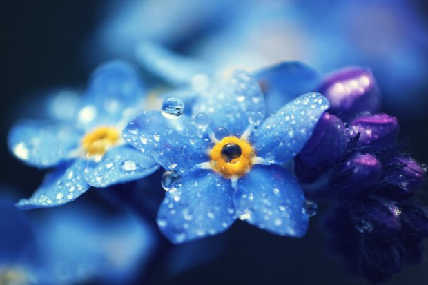 forget_me_not_by_thunderi-d8whe2f.jpg